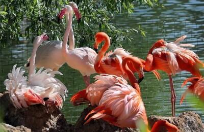 Тайна красного пера