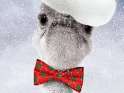 Новогодний переполох в оранжерее Деда Мороза